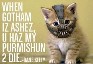 Un chaton affublé du masque de Bane